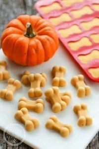Frosty Pumpkin Dog Treats helps el - 400 Dog Food And Dog Treat Recipes - RecipePin.com