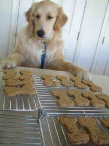 Doggie Treats - 400 Dog Food And Dog Treat Recipes - RecipePin.com