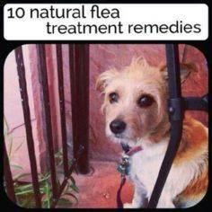 Natural flea treatment - 400 Dog Food And Dog Treat Recipes - RecipePin.com