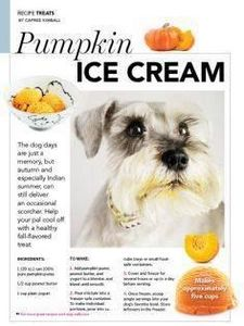 Pumpkin ice cream recipe for dogs  - 400 Dog Food And Dog Treat Recipes - RecipePin.com