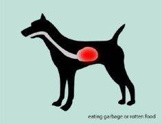 4 Ways to Treat Dog Diarrhea - Gro - 400 Dog Food And Dog Treat Recipes - RecipePin.com