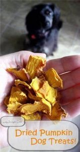 How to make dried pumpkin dog trea - 400 Dog Food And Dog Treat Recipes - RecipePin.com
