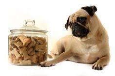 List of People Food that dogs can  - 400 Dog Food And Dog Treat Recipes - RecipePin.com