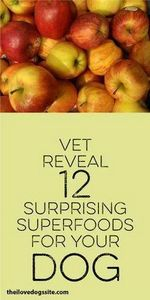 Vet Reveals 12 Surprising Superfoo - 400 Dog Food And Dog Treat Recipes - RecipePin.com