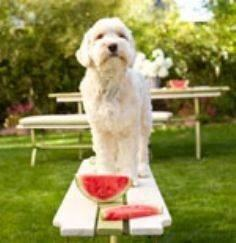 Dog Food Recipes: Bow Wow Brunch | - 400 Dog Food And Dog Treat Recipes - RecipePin.com