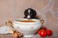 During winter, heating up your dog - 400 Dog Food And Dog Treat Recipes - RecipePin.com