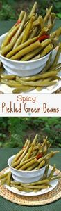 Spicy Pickled Green Beans are mild - 195 Green Bean Recipes - RecipePin.com