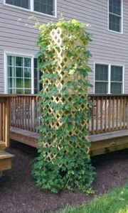 Growing your own hops - 300 Homebrewing Recipes to Brew at Home - RecipePin.com
