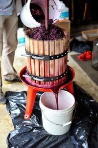 Making homemade wine and it is so  - 300 Homebrewing Recipes to Brew at Home - RecipePin.com
