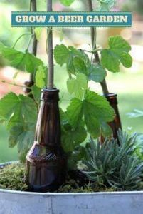 Hop To It: Grow A Beer Garden --&g - 300 Homebrewing Recipes to Brew at Home - RecipePin.com