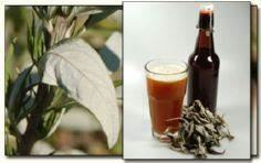 Herbal Beers for Homebrewing - 300 Homebrewing Recipes to Brew at Home - RecipePin.com
