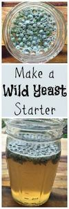 Cultivate your own wild yeast for  - 300 Homebrewing Recipes to Brew at Home - RecipePin.com