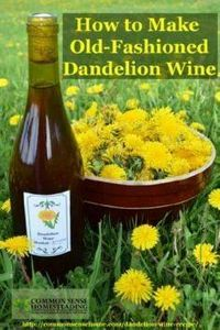 A homemade dandelion wine recipe so therapeutic to the kidneys and digestive system that it was deemed medicinal even for the ladies. - 300 Homebrewing Recipes to Brew at Home - RecipePin.com
